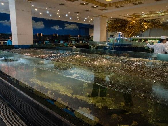 Tanks full of live seafood