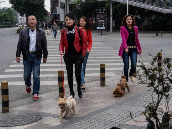 Walking the dogs in Chengdu