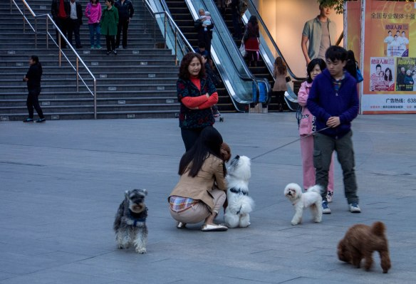 Doggie playtime in Chongqing