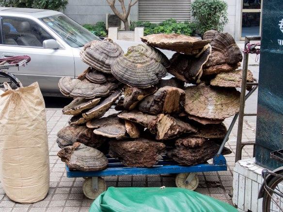 Huge dried mushrooms