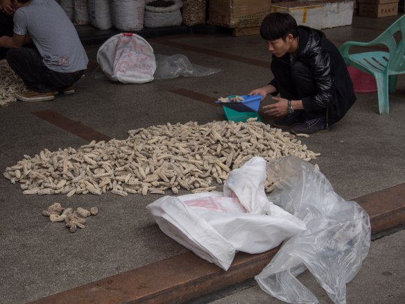 Selecting dried fungus